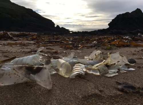 plastic bottle fragments in the ocean