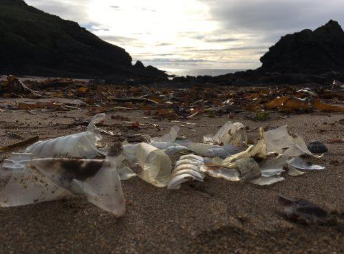 plastic bottle fragments at soar mill cove