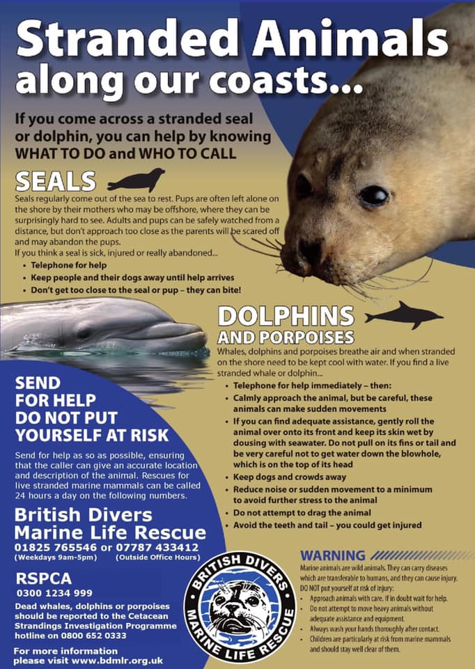 British Divers Marine Life Rescue - what to do if you find a stranded animal along UK coast